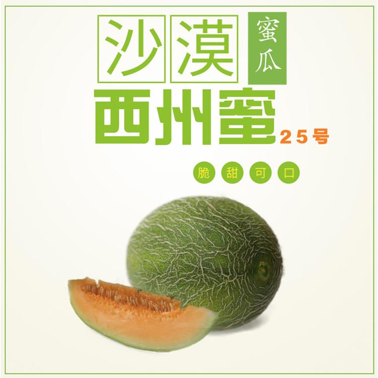 IP伯乐|西洲密瓜25号新鲜网纹瓜田现摘直发甘甜水润2个装包